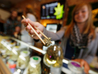 Pot businesses are a growing source of campaign cash
