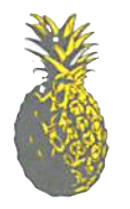KB%20PINEAPPLE_edited.png
