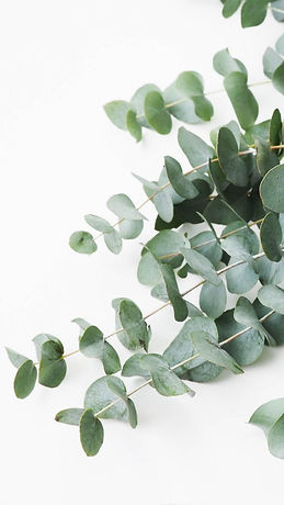 eucalyptus #plants #style.jpeg