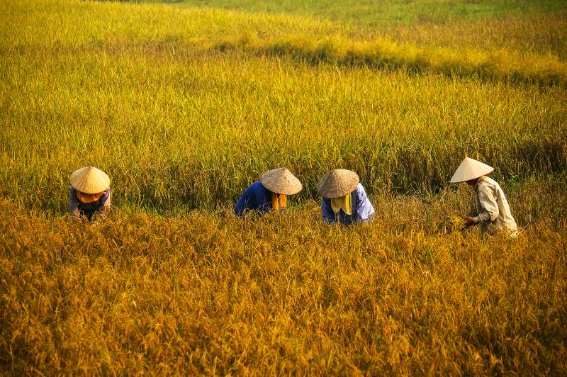 Farming in Vietnam