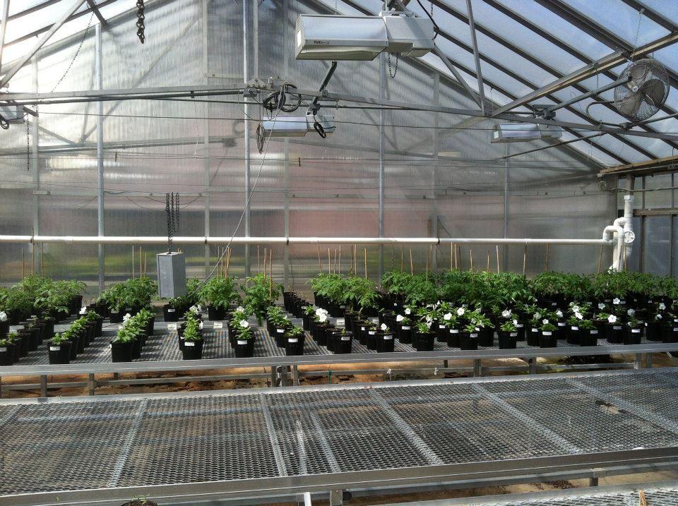 OSU Greenhouse Rain Harvesting Tank