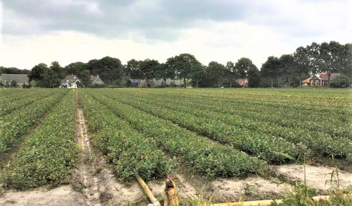 Over Duurzame bollenteelt Drenthe