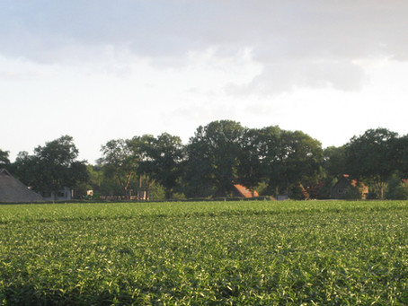 Gezondheidsraad: pesticiden kunnen schadelijk zijn voor de gezondheid, gebruik moet drastisch terug