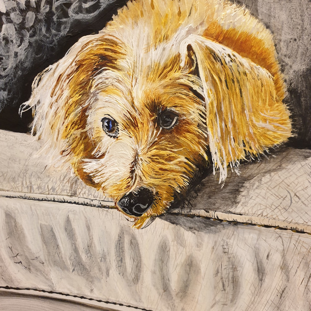 Max on sofa, A3, original sold, print £75