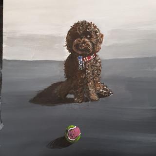 Vanessa's Cokapoo, A3, original sold, prints £75