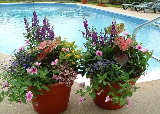 container-flower-gardening-container-flo