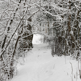 Into the woods | Winter woods