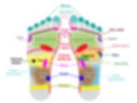 carte de reflexologie des principaux organes sur les pieds