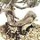 Thumbnail: JUNIPERUS Sabina de 44 cm de hauteur YAMADORI