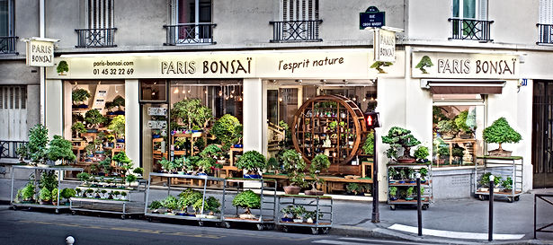 paris-bonsai