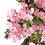 Thumbnail: AZALEE Satsuki de +16 ans 61 cm de hauteur   B85
