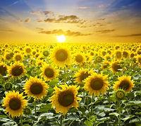 bigstock-Summer-landscape-beauty-sunse-2