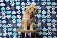 Pink Week 6.JPG