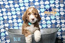 Blue Week 7.JPG