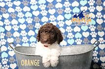 Orange Week 7.JPG