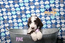 Pink Week 7.JPG