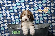 Green Week 7.JPG