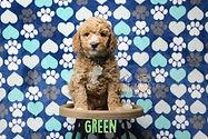 Green Week 6.JPG
