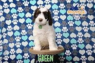 Green 7 Weeks.JPG