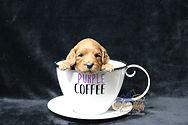 Purple 3 Weeks.JPG