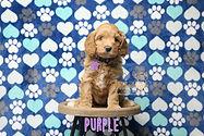 Purple Week 6.JPG