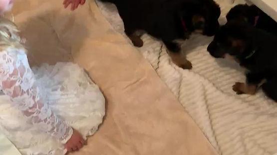 Eros & Kitana Puppies