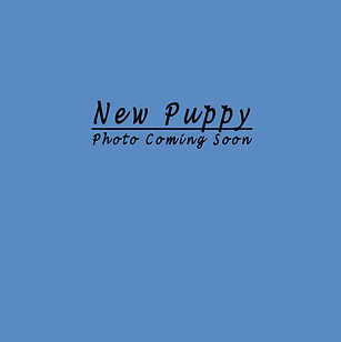 New Puppy Blank R.jpg