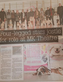 British Bulldog Trafford auditioned for a role in the film Legally Blonde article in the Milton Keynes Citizen Newspaper