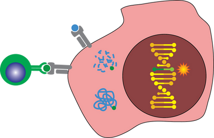 Epithelial cell 2_with1mutation_T cell.png