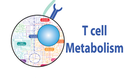 T cell metabolism_new