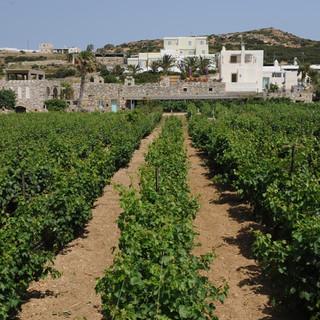 winery  moraitico.JPG
