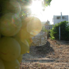 moraitico (winery).jpg