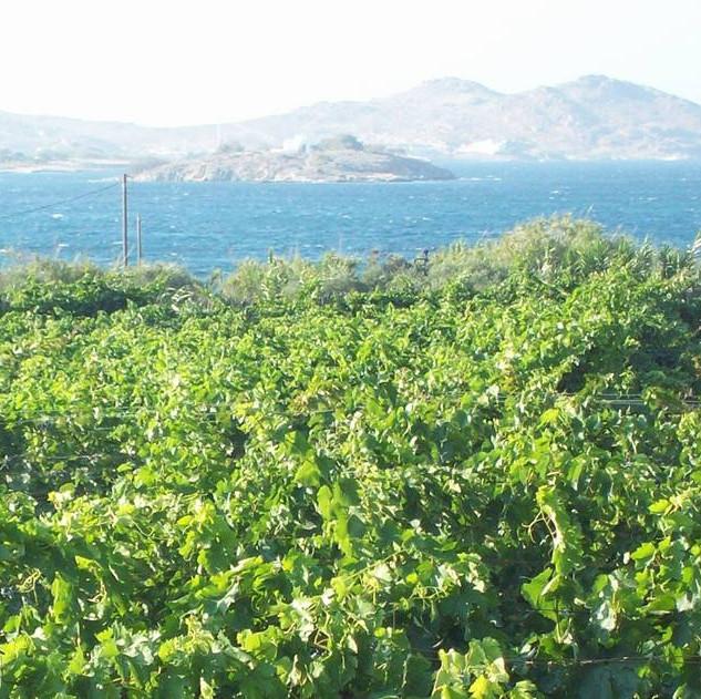moraitico (paros island).jpg