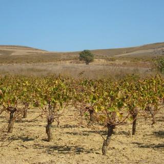 garalis vineyards.jpg