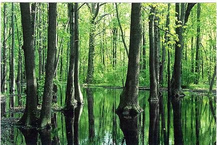 Klydel Wetland.jpg