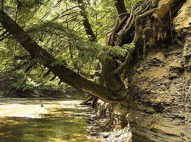 Along the Creek 2.JPG