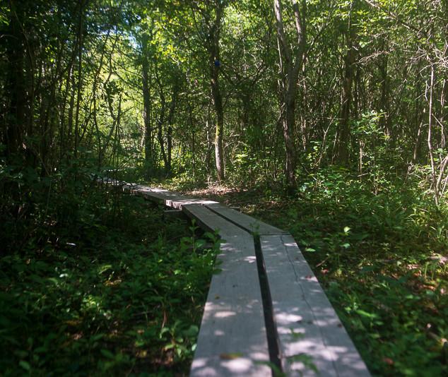 Margery Gallogly Nature Sanctuary