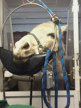 Sedated Pony.jpg