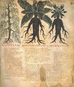 טקסט על צמחים