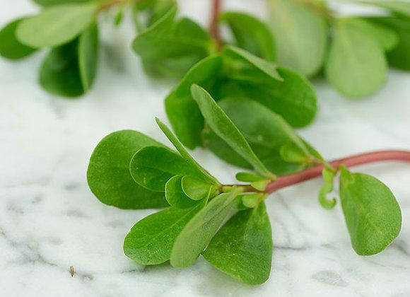 Purslane - Green