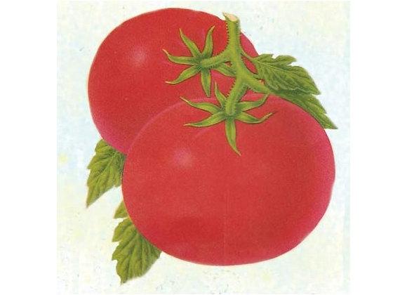 Moneymaker Tomato