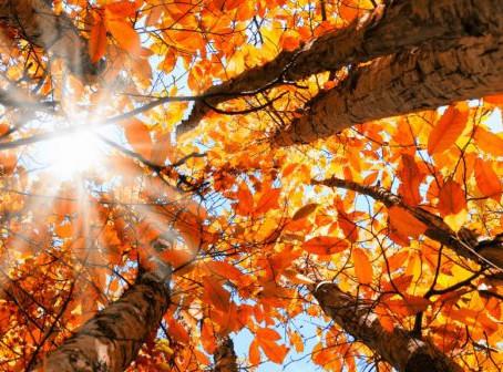 Stage d'automne - samedi 9 novembre