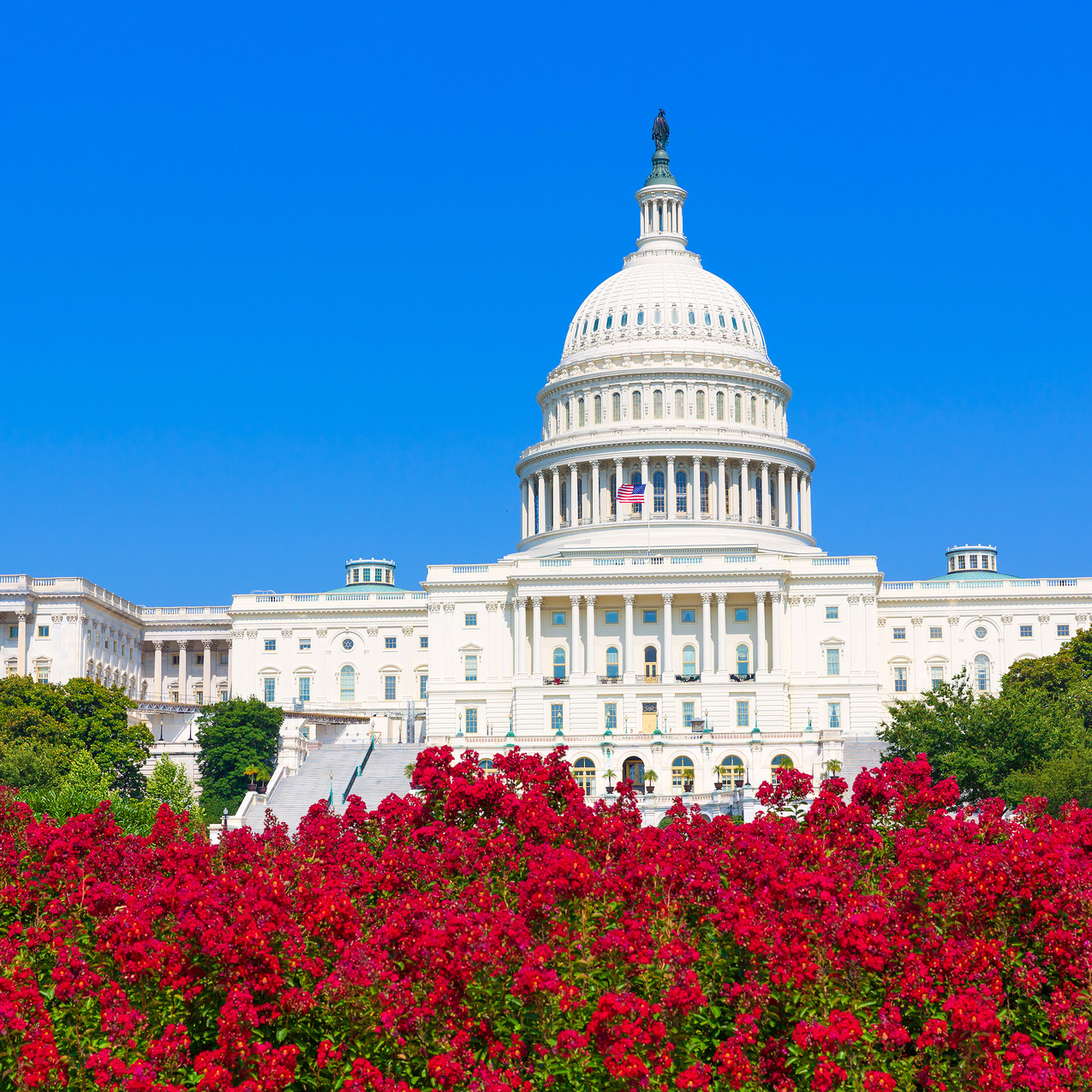 Capitol building Washington DC pink flowers garden USA congress US