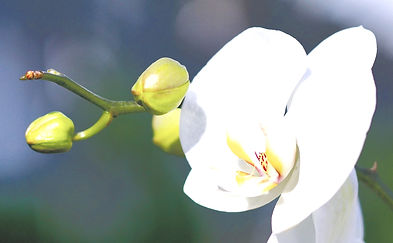 orchid-2016569_1920_edited.jpg