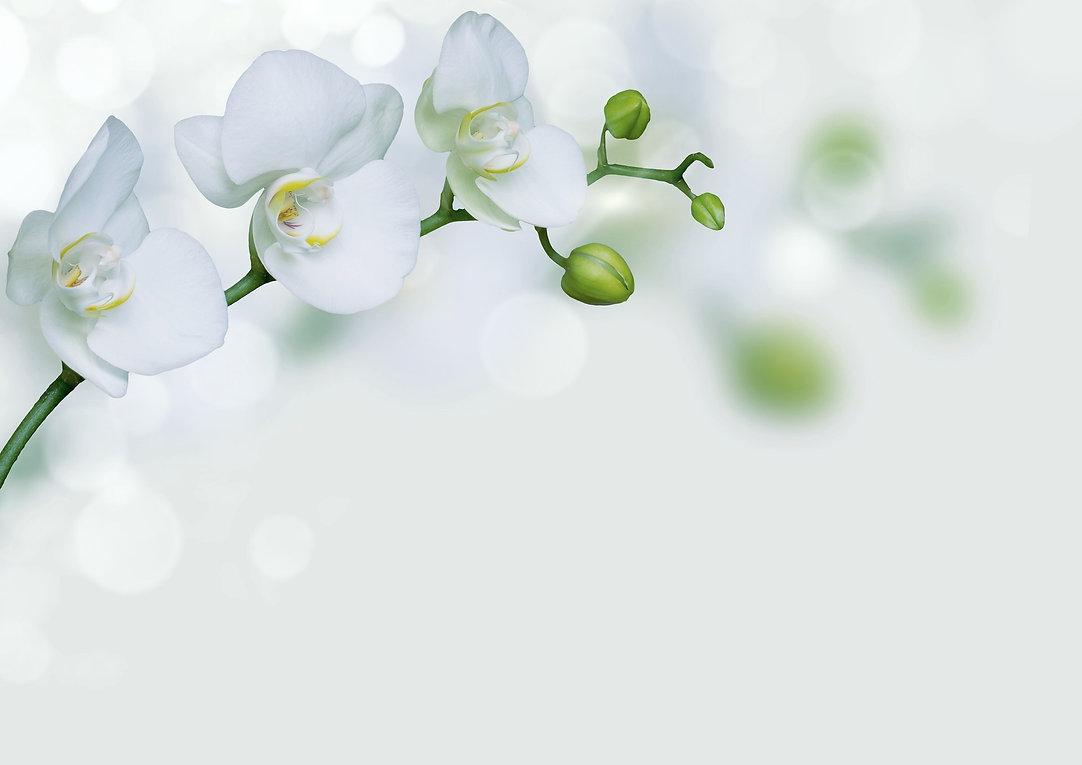 orchid-4080258_1920_edited.jpg