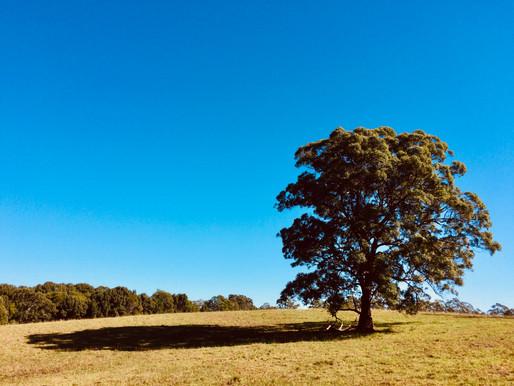 Point & Shoot | Coramba, NSW