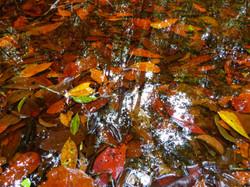 Peat Swamp, Indonesia
