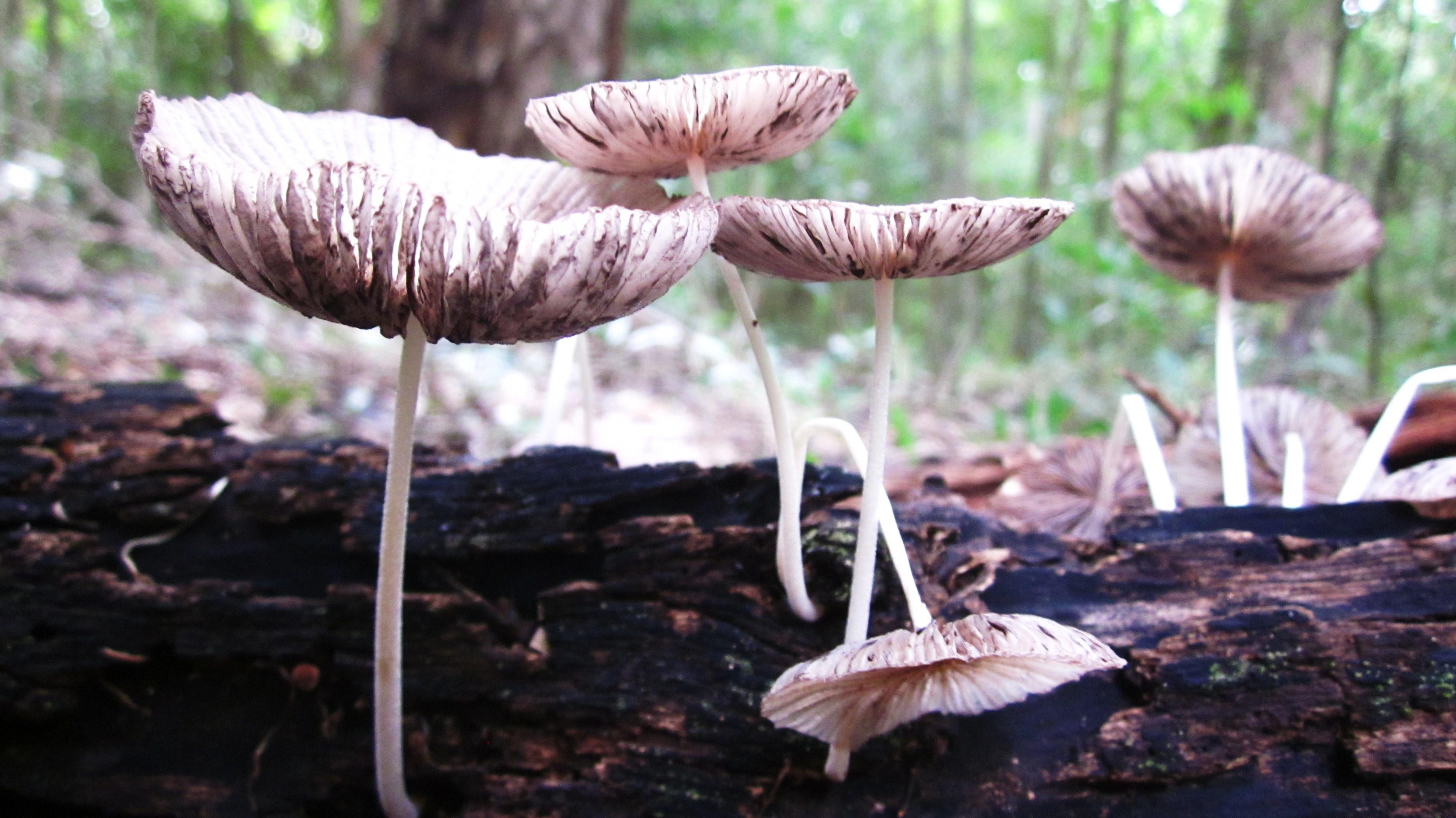 Fungi, Madgascar