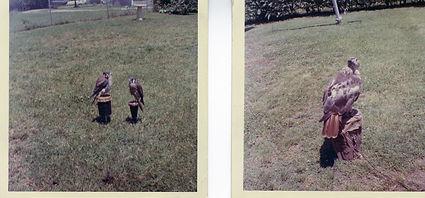 peadens birds 1963.jpg