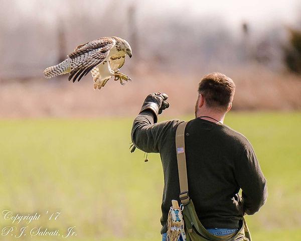 my hawk pic.jpg